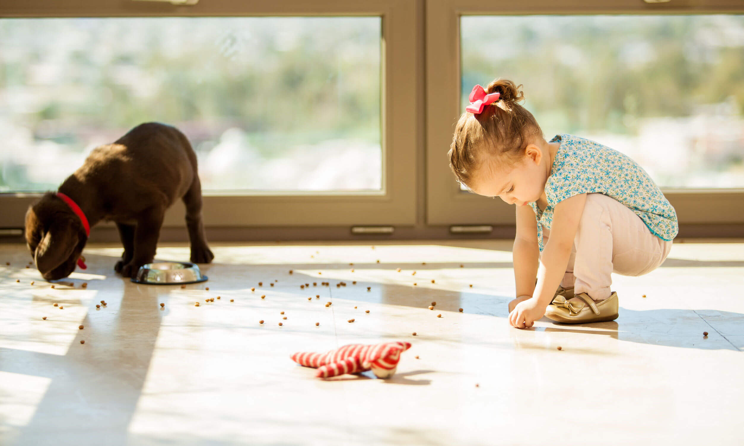 floor sanitization in st george ut child and dog on hard floor with spilled dog food
